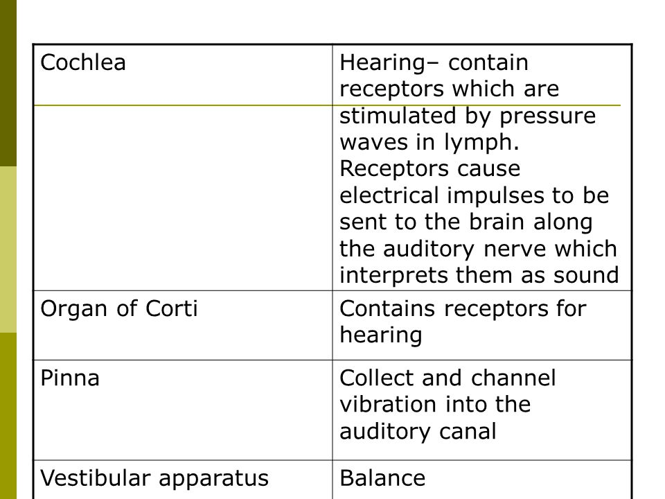 CochleaHearing– contain receptors which are stimulated by pressure waves in lymph. Receptors cause electrical impulses to be sent to the brain along t