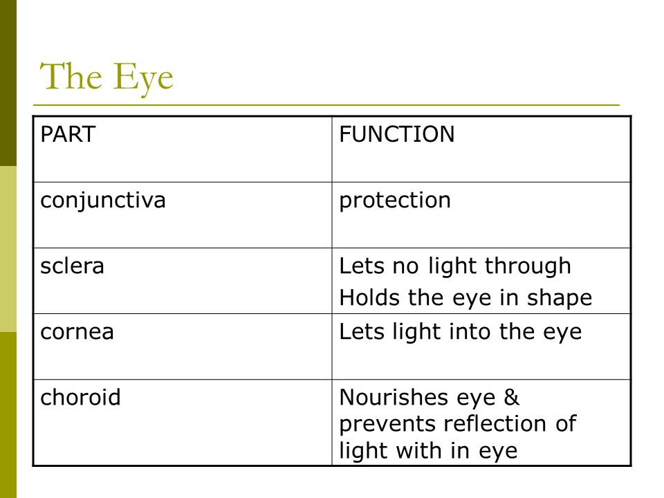 The Eye PARTFUNCTION conjunctivaprotection scleraLets no light through Holds the eye in shape corneaLets light into the eye choroidNourishes eye & pre