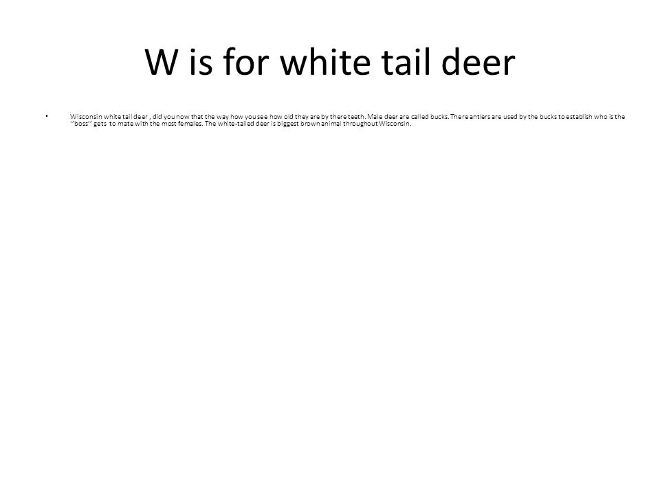 W is for white tail deer Wisconsin white tail deer, did you now that the way how you see how old they are by there teeth. Male deer are called bucks.