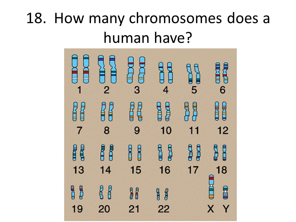 18. How many chromosomes does a human have?