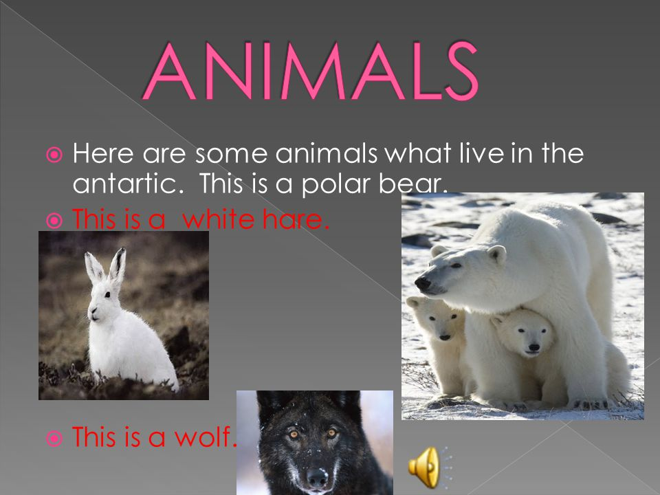  Here are some animals what live in the antartic.