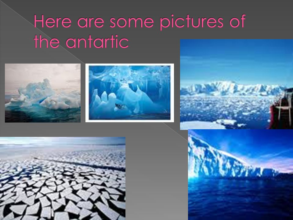  This is the food chain of the antartic. Lot's of animals eat fish and cod.
