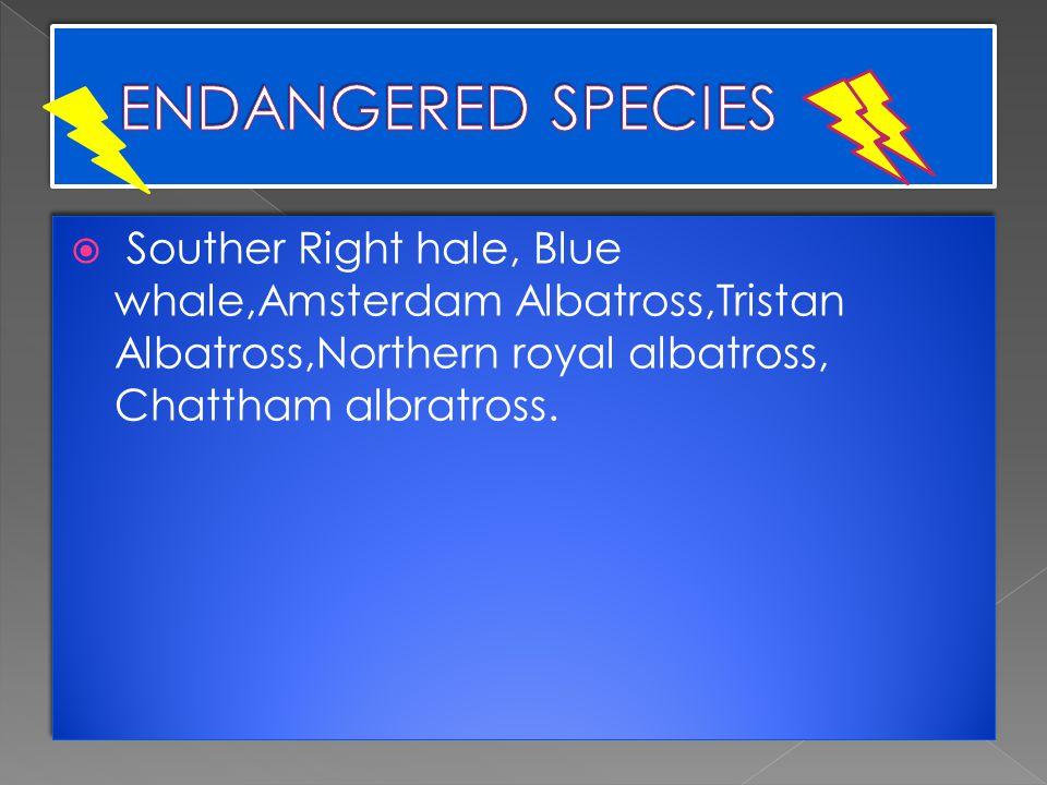  Souther Right hale, Blue whale,Amsterdam Albatross,Tristan Albatross,Northern royal albatross, Chattham albratross.