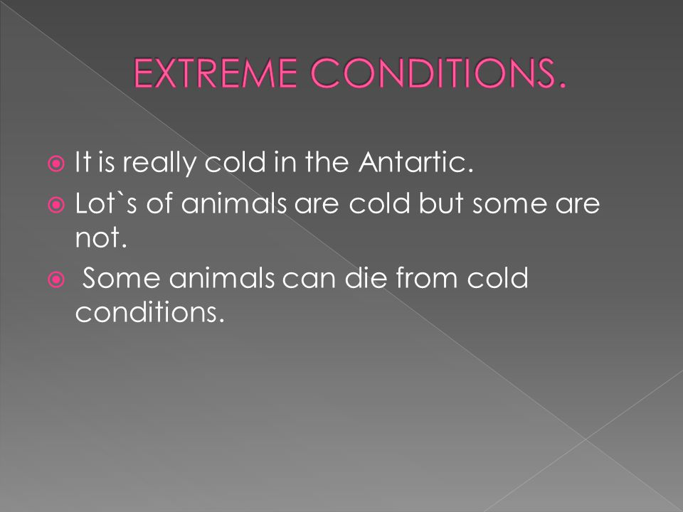  It is really cold in the Antartic. Lot`s of animals are cold but some are not.