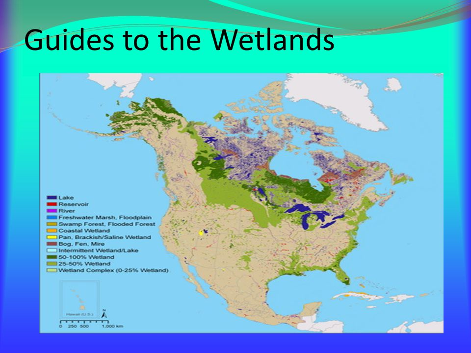 In order for a wetland to be in good condition the water should have a good quality.