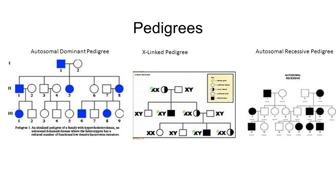 Pedigrees Autosomal Dominant PedigreeAutosomal Recessive Pedigree X-Linked Pedigree