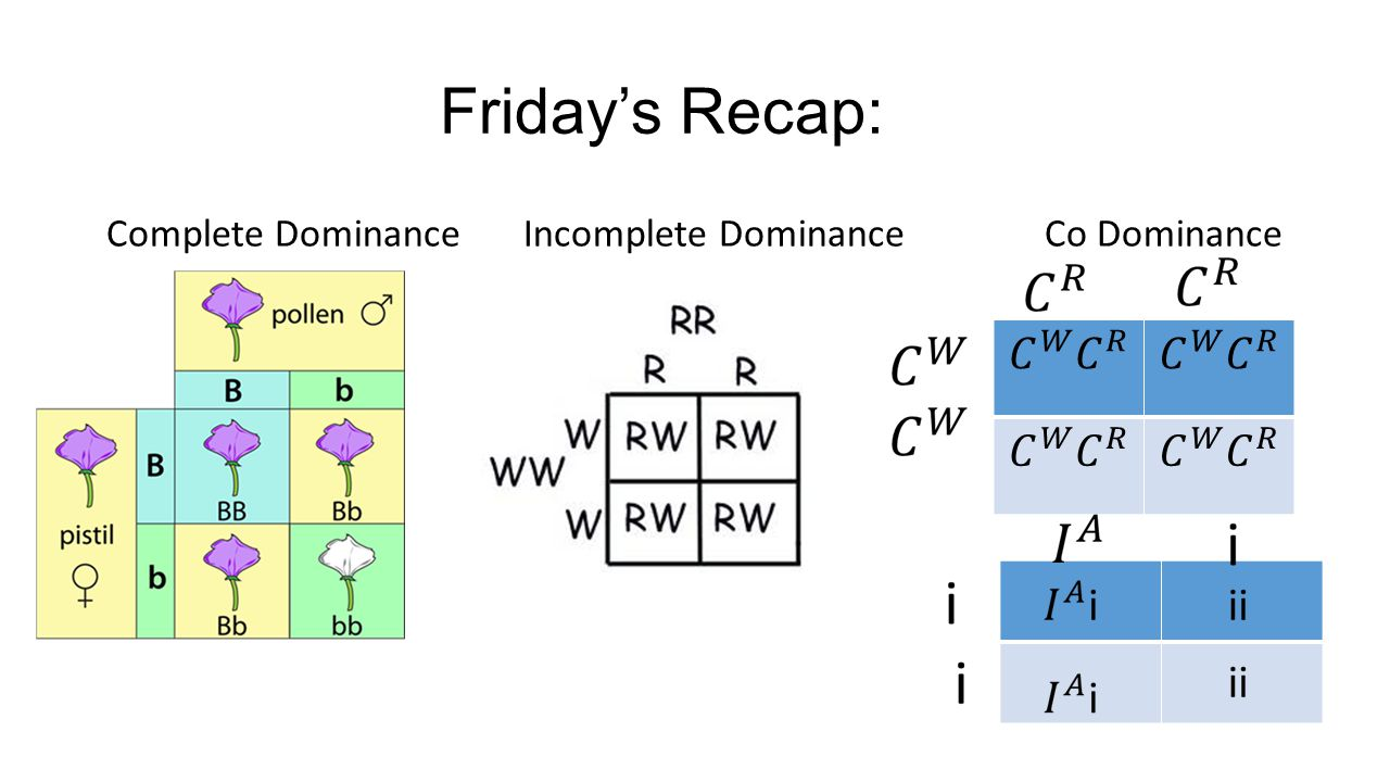 Friday's Recap: Complete DominanceIncomplete DominanceCo Dominance