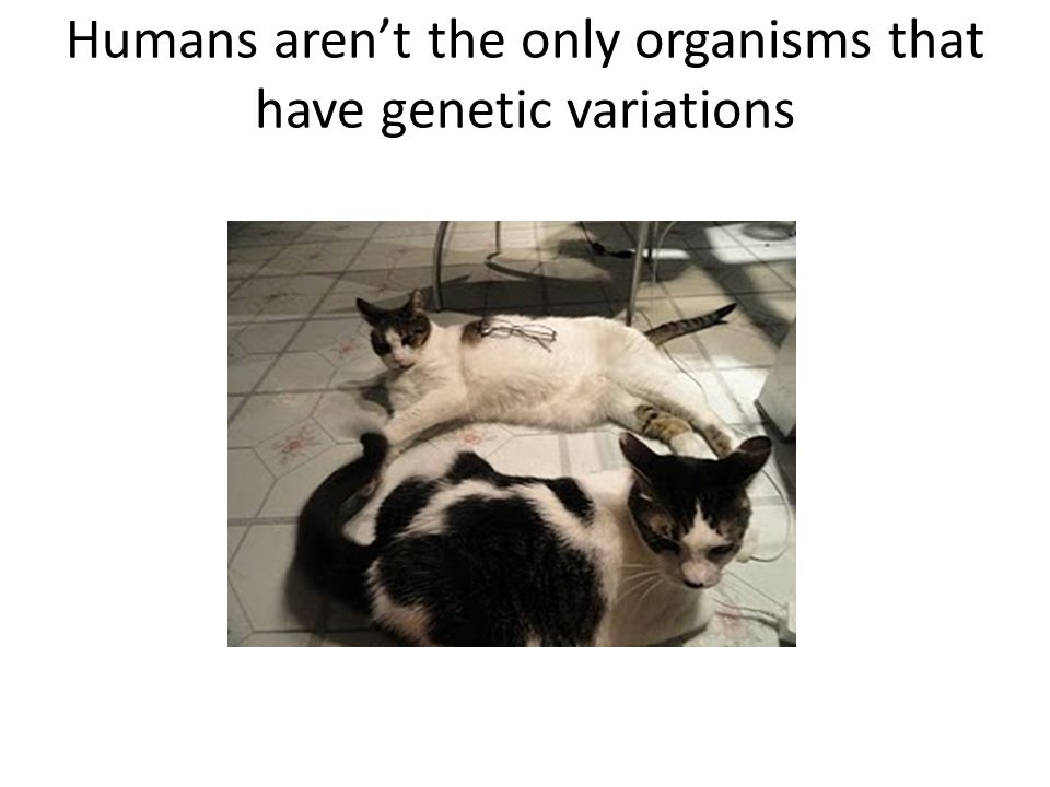 Humans aren't the only organisms that have genetic variations