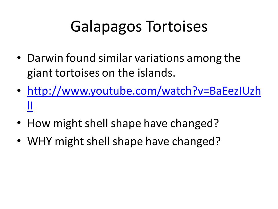 Galapagos Tortoises Darwin found similar variations among the giant tortoises on the islands. http://www.youtube.com/watch?v=BaEezIUzh lI http://www.y