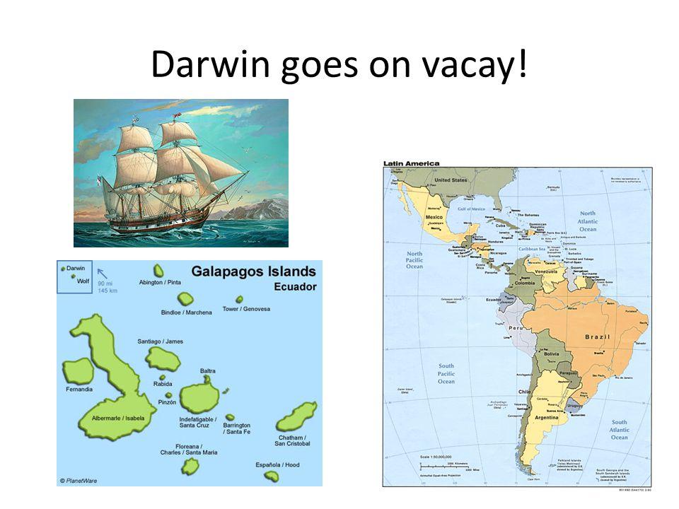 Darwin goes on vacay!
