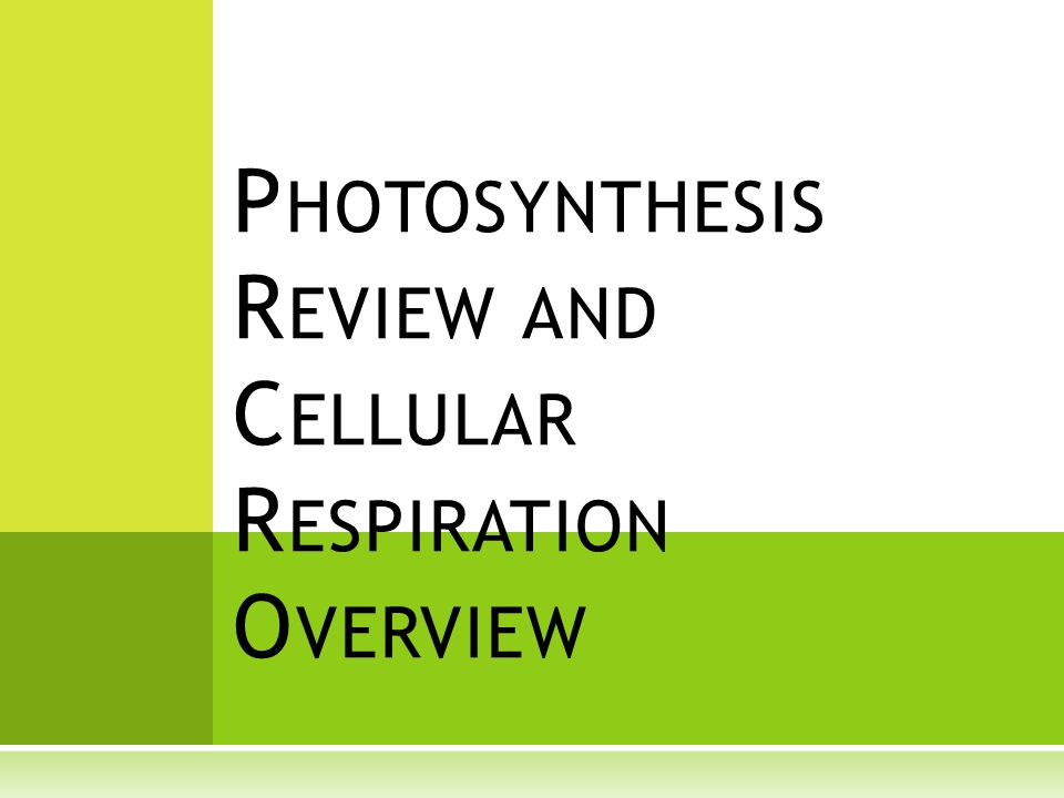 P HOTOSYNTHESIS R EVIEW AND C ELLULAR R ESPIRATION O VERVIEW