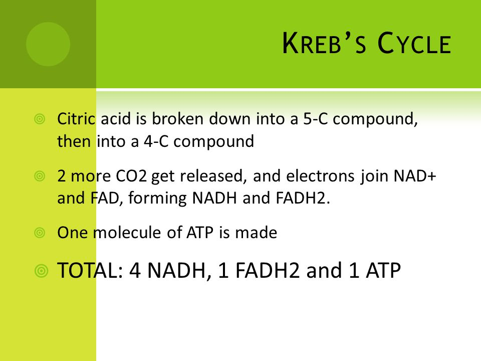 K REB ' S C YCLE  Citric acid is broken down into a 5-C compound, then into a 4-C compound  2 more CO2 get released, and electrons join NAD+ and FAD, forming NADH and FADH2.