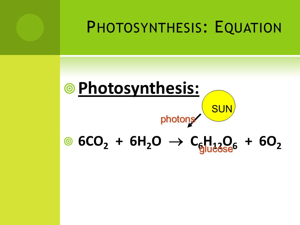 P HOTOSYNTHESIS : E QUATION  Photosynthesis:  6CO 2 + 6H 2 O  C 6 H 12 O 6 + 6O 2 glucose SUN photons