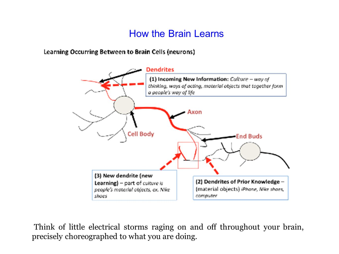 How the Brain Learns Think of little electrical storms raging on and off throughout your brain, precisely choreographed to what you are doing.