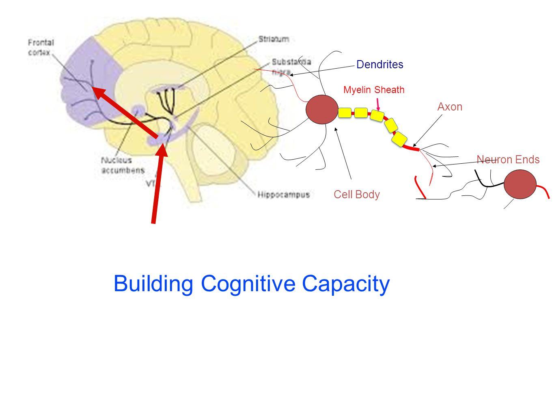 Axon Neuron Ends Cell Body Dendrites Myelin Sheath Building Cognitive Capacity