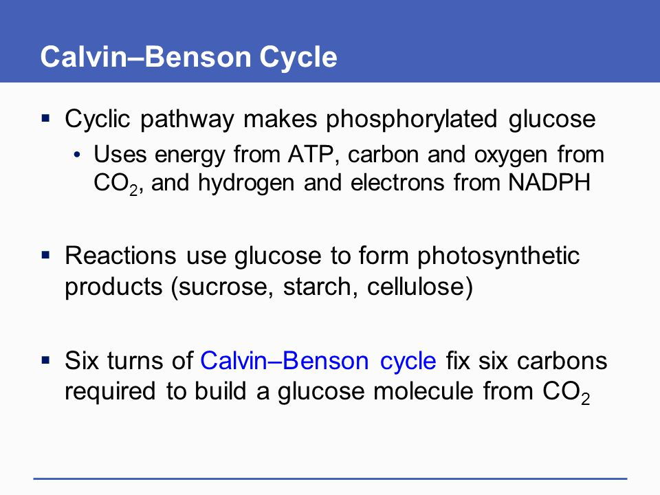 Calvin–Benson Cycle  Cyclic pathway makes phosphorylated glucose Uses energy from ATP, carbon and oxygen from CO 2, and hydrogen and electrons from N