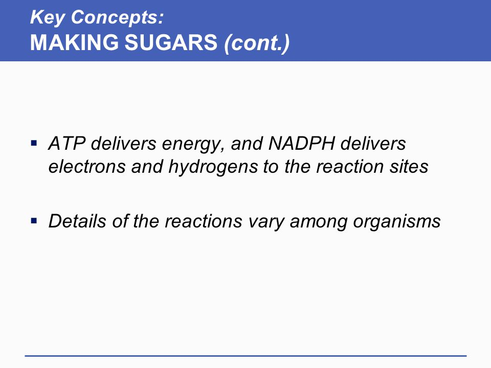 Key Concepts: MAKING SUGARS (cont.)  ATP delivers energy, and NADPH delivers electrons and hydrogens to the reaction sites  Details of the reactions