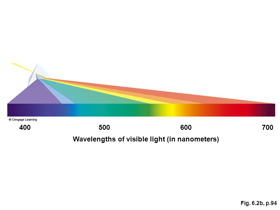 Fig. 6.2b, p.94 Wavelengths of visible light (in nanometers) 400500600700