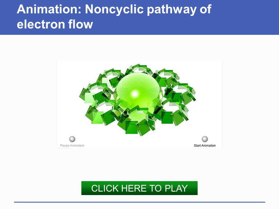 Animation: Noncyclic pathway of electron flow CLICK HERE TO PLAY