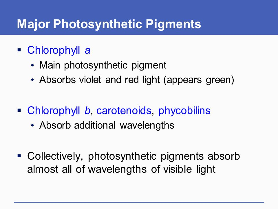 Major Photosynthetic Pigments  Chlorophyll a Main photosynthetic pigment Absorbs violet and red light (appears green)  Chlorophyll b, carotenoids, p