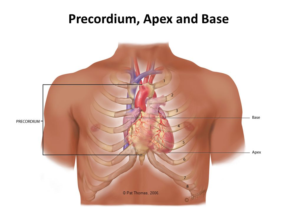 Automaticity Electrical Conduction Sinoatrial (SA) node  pacemaker Atrioventricular (AV) node Bundle of his Left & right bundle branches Purkinje Fibers Conduction