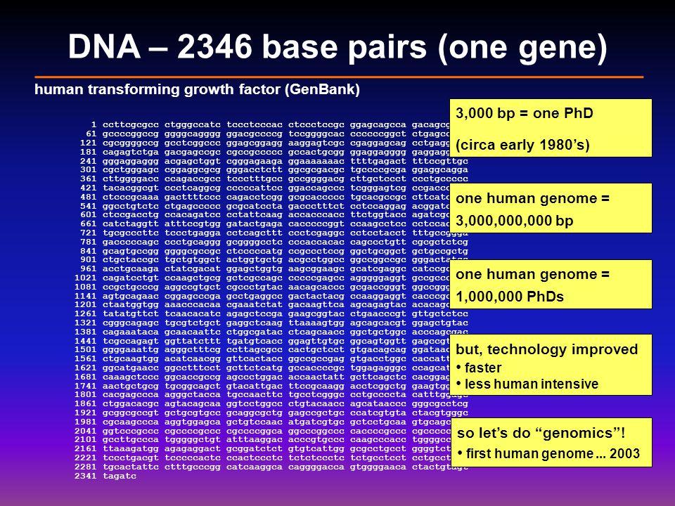 DNA – 2346 base pairs (one gene) 1 ccttcgcgcc ctgggccatc tccctcccac ctccctccgc ggagcagcca gacagcgagg 61 gccccggccg ggggcagggg ggacgccccg tccggggcac ccccccggct ctgagccgcc 121 cgcggggccg gcctcggccc ggagcggagg aaggagtcgc cgaggagcag cctgaggccc 181 cagagtctga gacgagccgc cgccgccccc gccactgcgg ggaggagggg gaggaggagc 241 gggaggaggg acgagctggt cgggagaaga ggaaaaaaac ttttgagact tttccgttgc 301 cgctgggagc cggaggcgcg gggacctctt ggcgcgacgc tgccccgcga ggaggcagga 361 cttggggacc ccagaccgcc tccctttgcc gccggggacg cttgctccct ccctgccccc 421 tacacggcgt ccctcaggcg cccccattcc ggaccagccc tcgggagtcg ccgacccggc 481 ctcccgcaaa gacttttccc cagacctcgg gcgcaccccc tgcacgccgc cttcatcccc 541 ggcctgtctc ctgagccccc gcgcatccta gaccctttct cctccaggag acggatctct 601 ctccgacctg ccacagatcc cctattcaag accacccacc ttctggtacc agatcgcgcc 661 catctaggtt atttccgtgg gatactgaga cacccccggt ccaagcctcc cctccaccac 721 tgcgcccttc tccctgagga cctcagcttt ccctcgaggc cctcctacct tttgccggga 781 gacccccagc ccctgcaggg gcggggcctc cccaccacac cagccctgtt cgcgctctcg 841 gcagtgccgg ggggcgccgc ctcccccatg ccgccctccg ggctgcggct gctgccgctg 901 ctgctaccgc tgctgtggct actggtgctg acgcctggcc ggccggccgc gggactatcc 961 acctgcaaga ctatcgacat ggagctggtg aagcggaagc gcatcgaggc catccgcggc 1021 cagatcctgt ccaagctgcg gctcgccagc cccccgagcc agggggaggt gccgcccggc 1081 ccgctgcccg aggccgtgct cgccctgtac aacagcaccc gcgaccgggt ggccggggag 1141 agtgcagaac cggagcccga gcctgaggcc gactactacg ccaaggaggt cacccgcgtg 1201 ctaatggtgg aaacccacaa cgaaatctat gacaagttca agcagagtac acacagcata 1261 tatatgttct tcaacacatc agagctccga gaagcggtac ctgaacccgt gttgctctcc 1321 cgggcagagc tgcgtctgct gaggctcaag ttaaaagtgg agcagcacgt ggagctgtac 1381 cagaaataca gcaacaattc ctggcgatac ctcagcaacc ggctgctggc acccagcgac 1441 tcgccagagt ggttatcttt tgatgtcacc ggagttgtgc ggcagtggtt gagccgtgga 1501 ggggaaattg agggctttcg ccttagcgcc cactgctcct gtgacagcag ggataacaca 1561 ctgcaagtgg acatcaacgg gttcactacc ggccgccgag gtgacctggc caccattcat 1621 ggcatgaacc ggcctttcct gcttctcatg gccaccccgc tggagagggc ccagcatctg
