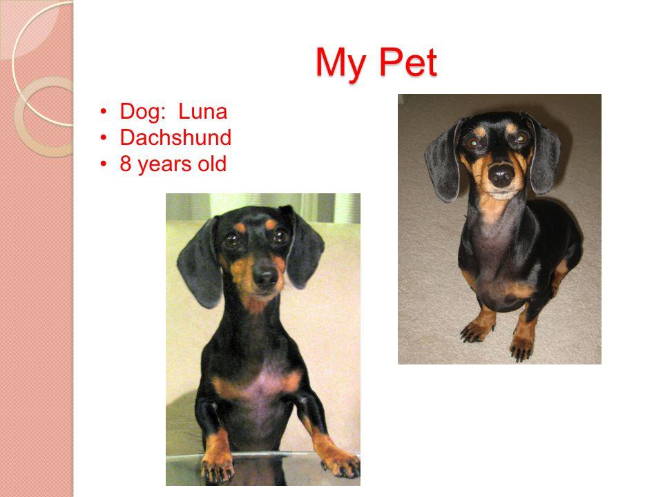 My Pet Dog: Luna Dachshund 8 years old