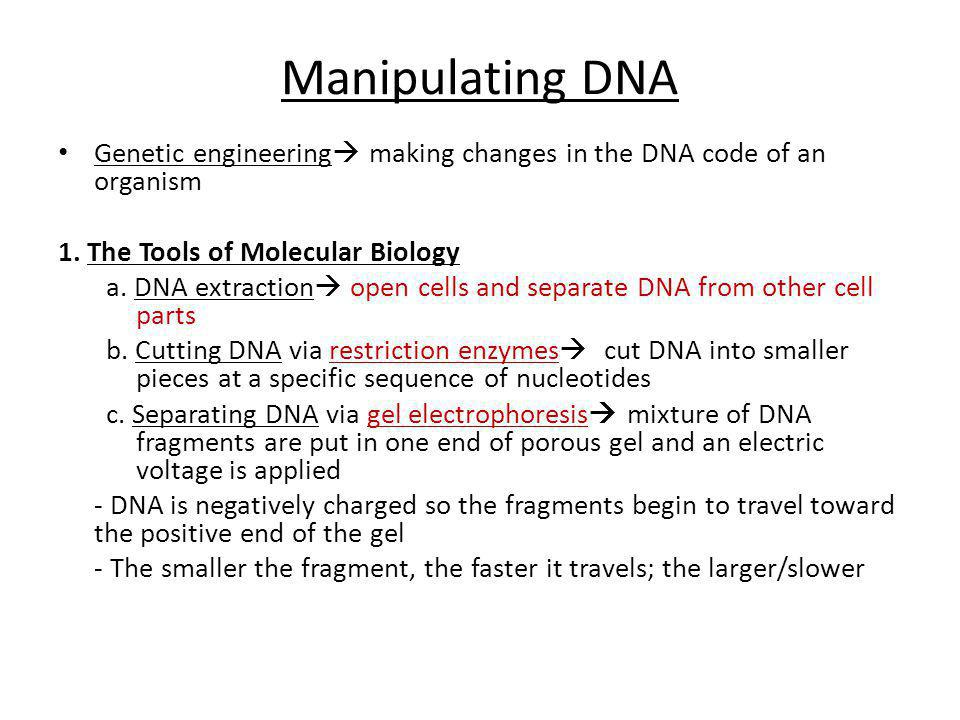 Manipulating DNA Genetic engineering  making changes in the DNA code of an organism 1. The Tools of Molecular Biology a. DNA extraction  open cells