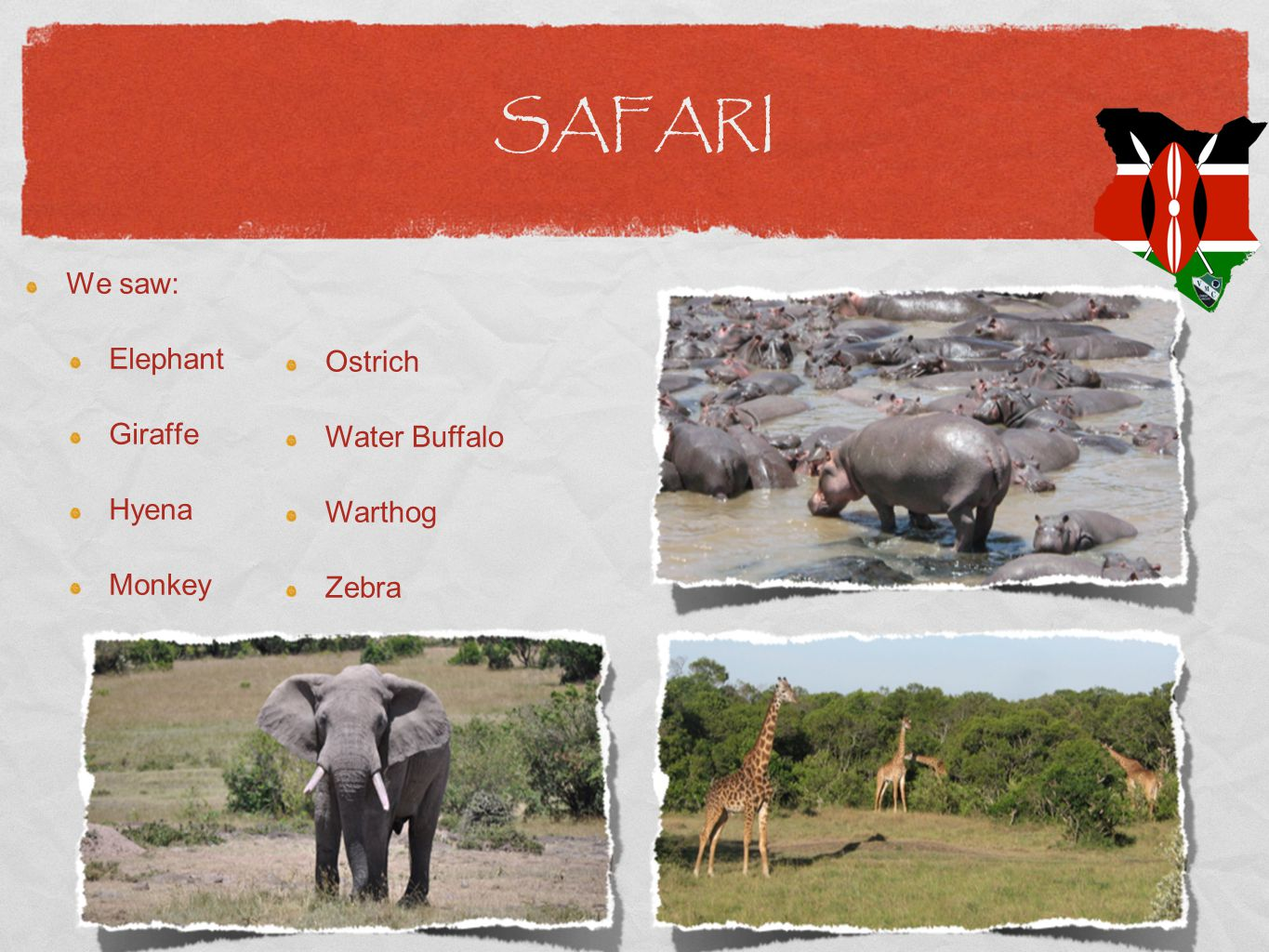 SAFARI We saw: Elephant Giraffe Hyena Monkey Ostrich Water Buffalo Warthog Zebra