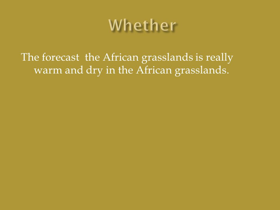The forecast the African grasslands is really warm and dry in the African grasslands.