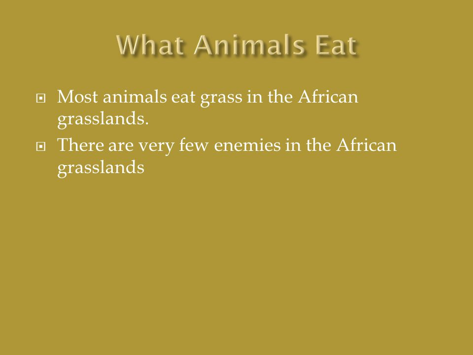  Most animals eat grass in the African grasslands.