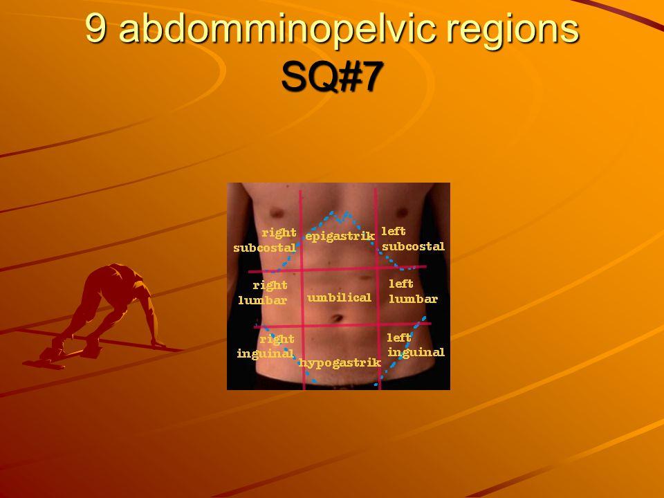 9 abdomminopelvic regions SQ#7
