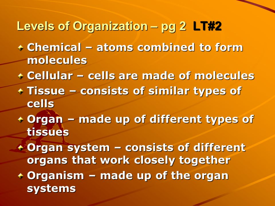 Levels of Organization – pg 2 LT#2 Chemical – atoms combined to form molecules Cellular – cells are made of molecules Tissue – consists of similar types of cells Organ – made up of different types of tissues Organ system – consists of different organs that work closely together Organism – made up of the organ systems