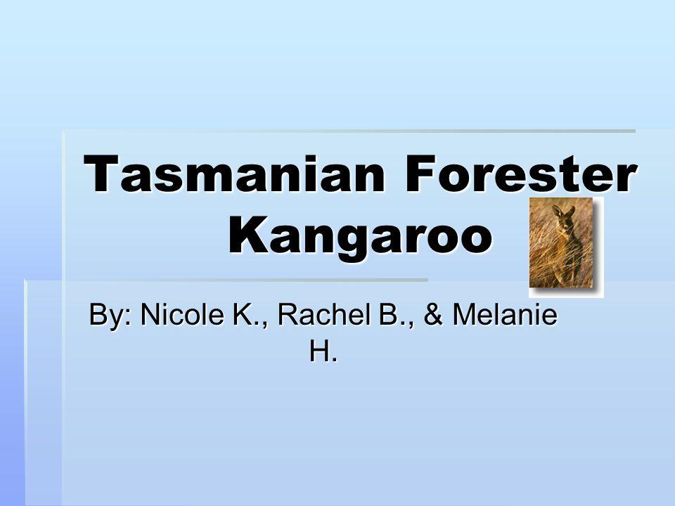 Tasmanian Forester Kangaroo By: Nicole K., Rachel B., & Melanie H.
