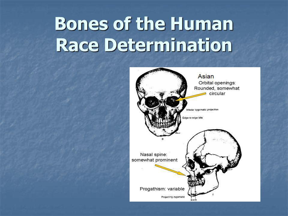 Bones of the Human Race Determination