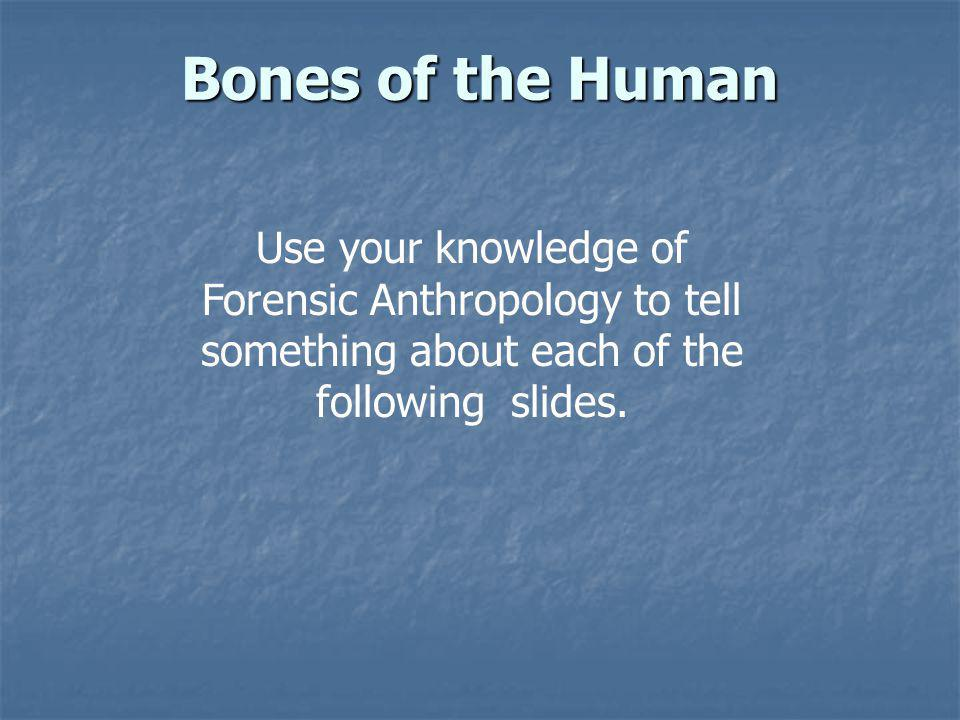 Bones of the Human Use your knowledge of Forensic Anthropology to tell something about each of the following slides.