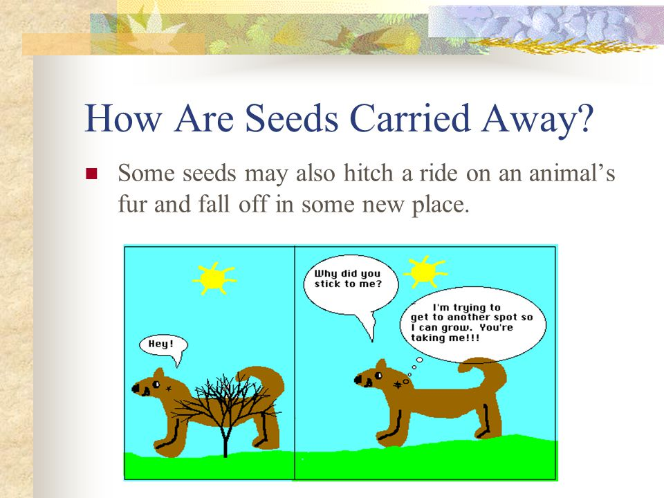 Some seeds may also hitch a ride on an animal's fur and fall off in some new place.