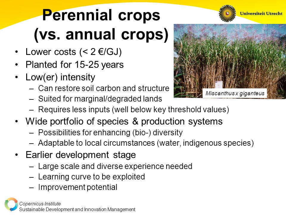 Copernicus Institute Sustainable Development and Innovation Management Perennial crops (vs.