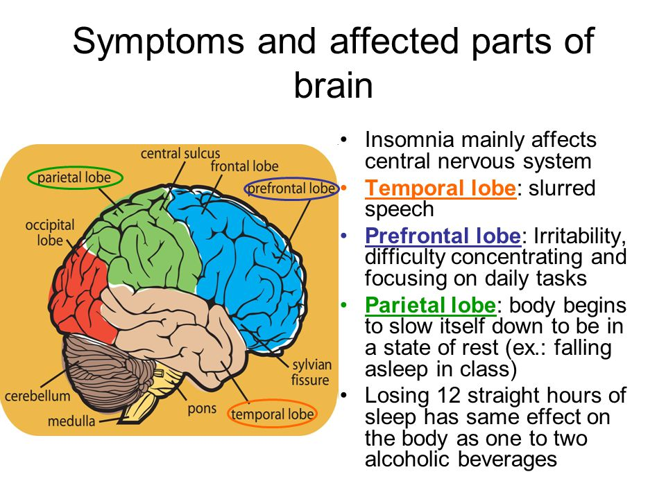 Symptoms and affected parts of brain Insomnia mainly affects central nervous system Temporal lobe: slurred speech Prefrontal lobe: Irritability, difficulty concentrating and focusing on daily tasks Parietal lobe: body begins to slow itself down to be in a state of rest (ex.: falling asleep in class) Losing 12 straight hours of sleep has same effect on the body as one to two alcoholic beverages