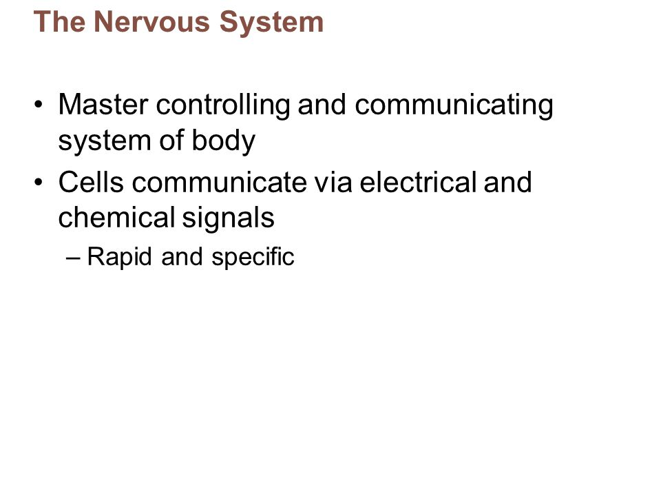 The Nervous System Master controlling and communicating system of body Cells communicate via electrical and chemical signals –Rapid and specific