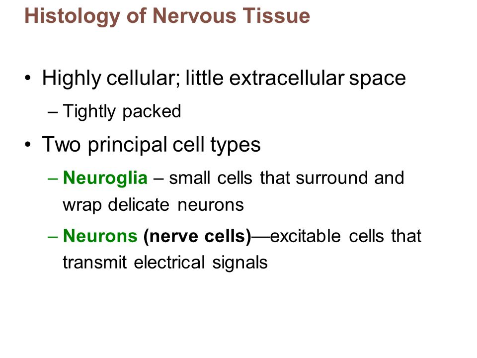 Histology of Nervous Tissue Highly cellular; little extracellular space –Tightly packed Two principal cell types –Neuroglia – small cells that surroun