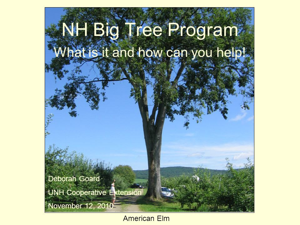 NH Big Tree Program What is it and how can you help.