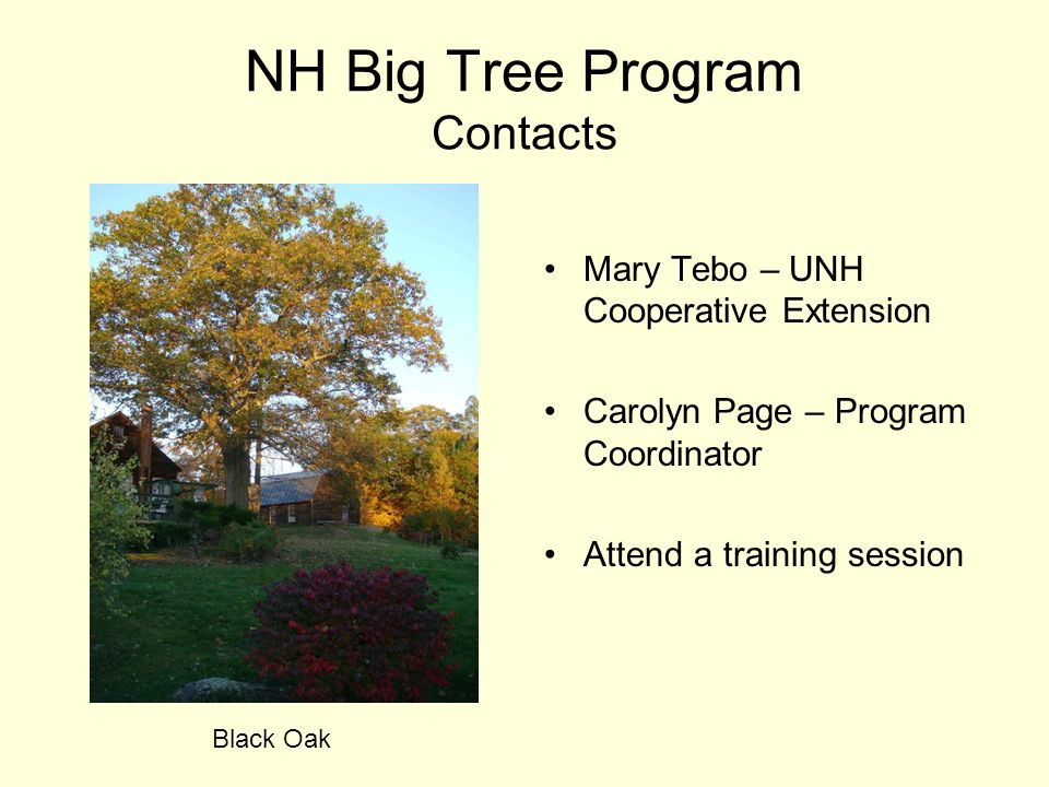 NH Big Tree Program Contacts Mary Tebo – UNH Cooperative Extension Carolyn Page – Program Coordinator Attend a training session Black Oak