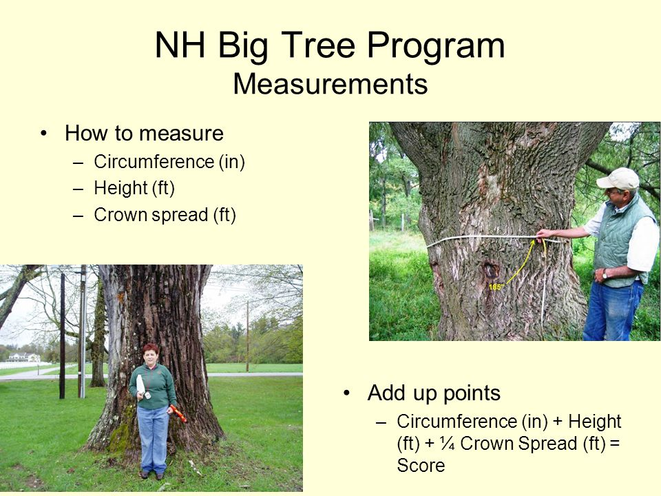 NH Big Tree Program Measurements How to measure –Circumference (in) –Height (ft) –Crown spread (ft) Add up points –Circumference (in) + Height (ft) + ¼ Crown Spread (ft) = Score