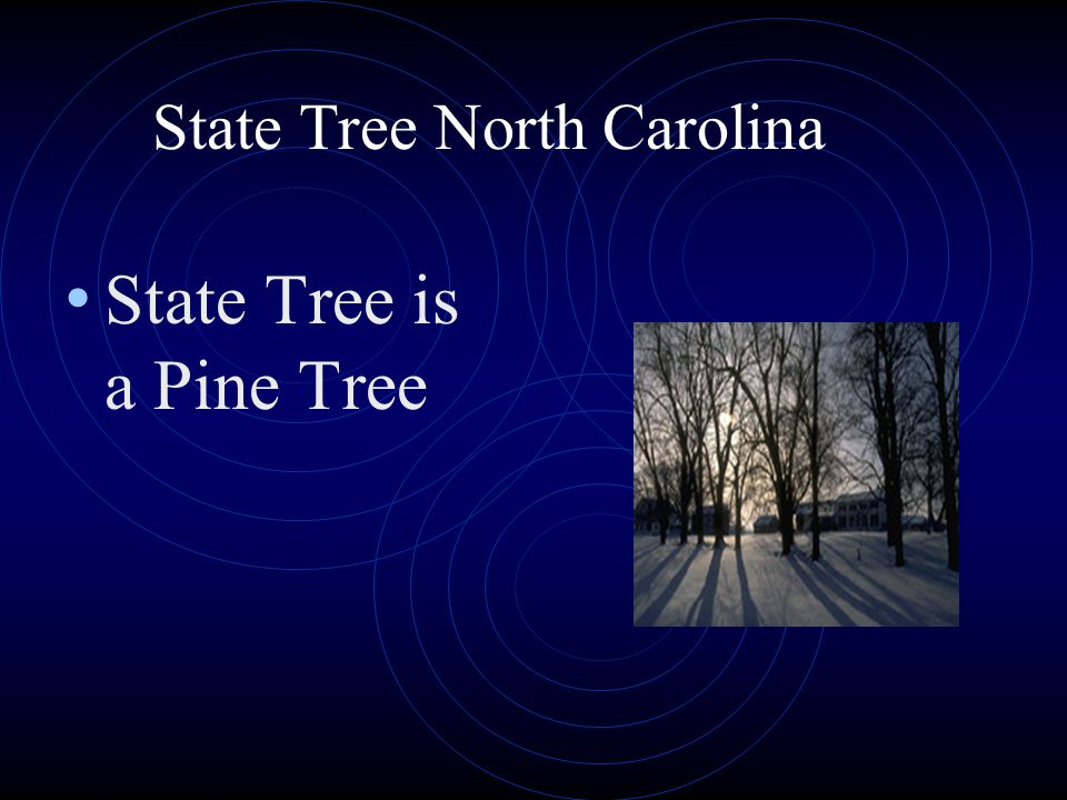 State Tree North Carolina State Tree is a Pine Tree