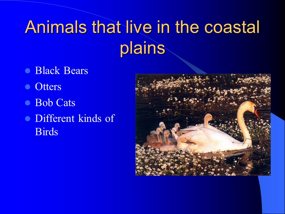 Animals that live in the coastal plains Black Bears Otters Bob Cats Different kinds of Birds
