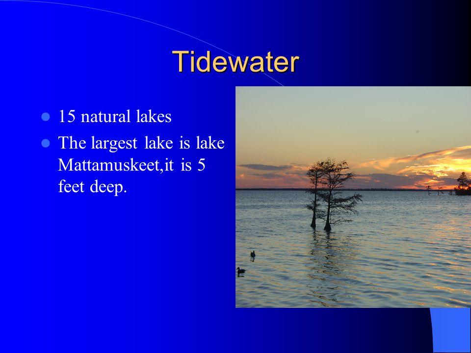 Tidewater 15 natural lakes The largest lake is lake Mattamuskeet,it is 5 feet deep.