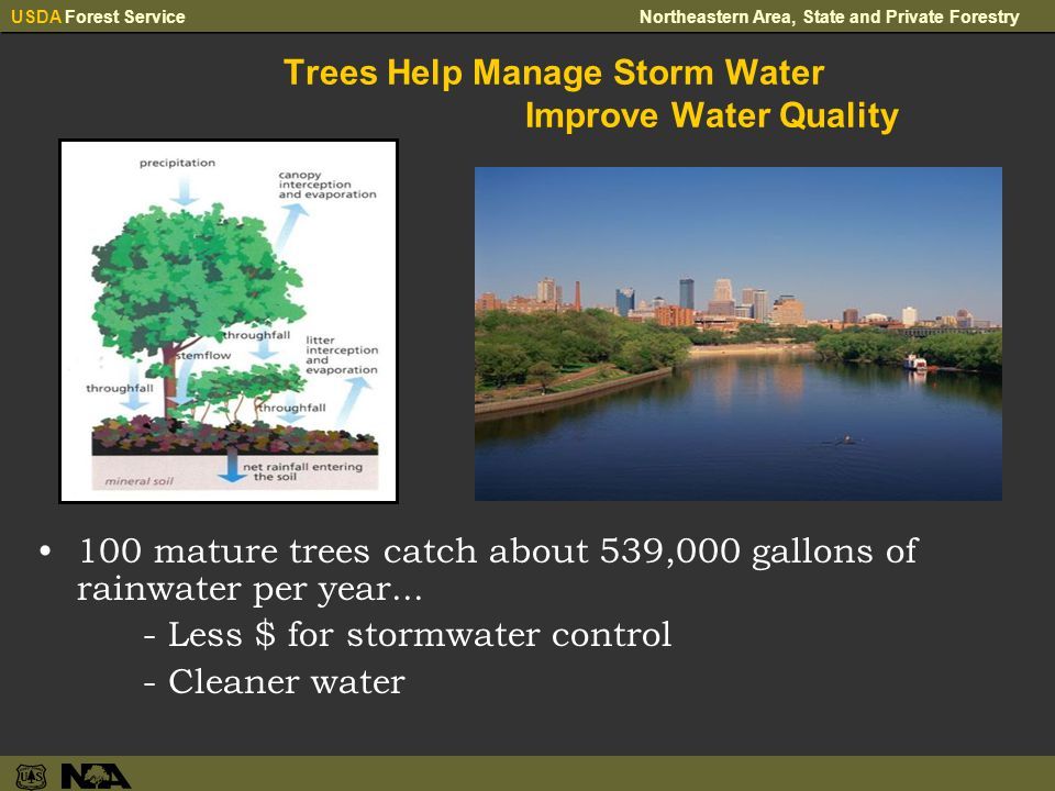 USDA Forest ServiceNortheastern Area, State and Private Forestry Trees Help Manage Storm Water Improve Water Quality 100 mature trees catch about 539,000 gallons of rainwater per year...