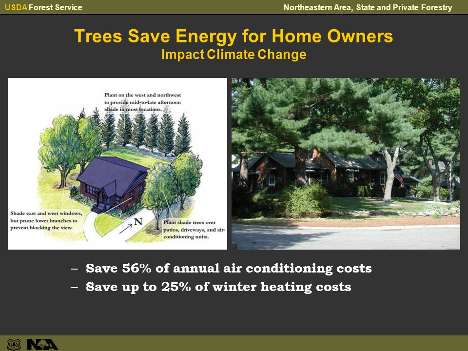 USDA Forest ServiceNortheastern Area, State and Private Forestry Trees Save Energy for Home Owners Impact Climate Change – Save 56% of annual air conditioning costs – Save up to 25% of winter heating costs