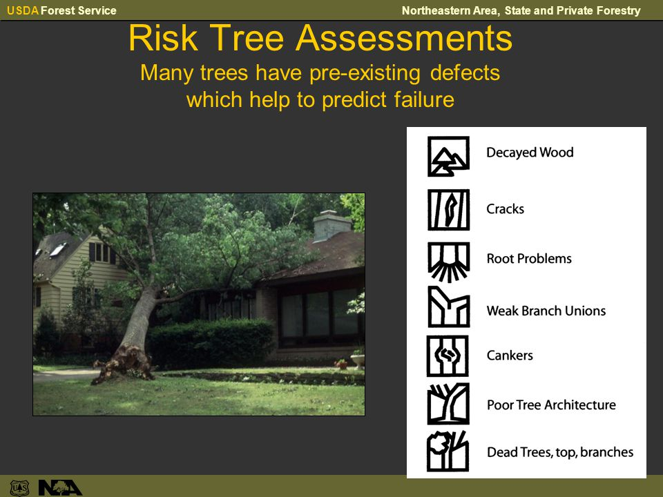 USDA Forest ServiceNortheastern Area, State and Private Forestry Risk Tree Assessments Many trees have pre-existing defects which help to predict failure